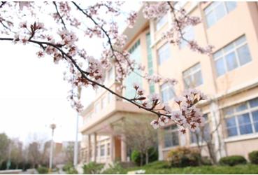 青岛求实职业技术学院为您解读习大大为何对职业教育如此重视?